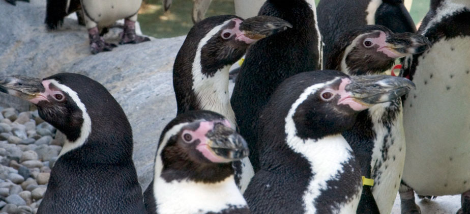 Columbus Zoo and Aquarium - Reservations - Birth to 17 Years