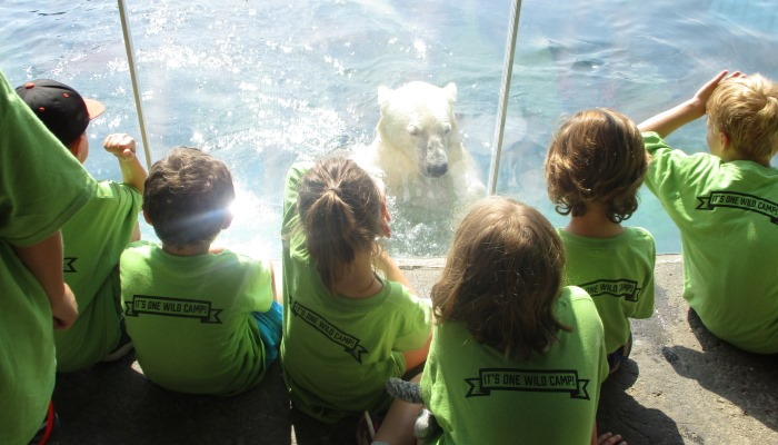 During These Non Residential Day Camps Your Child Will Explore The Zoo And Get An In Depth Opportunity To Learn About Our Natural World