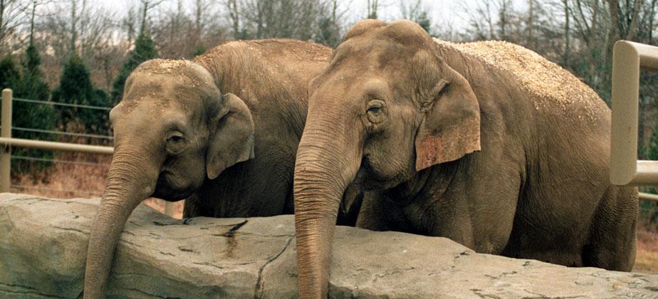 Columbus Zoo And Aquarium Reservations Schools And