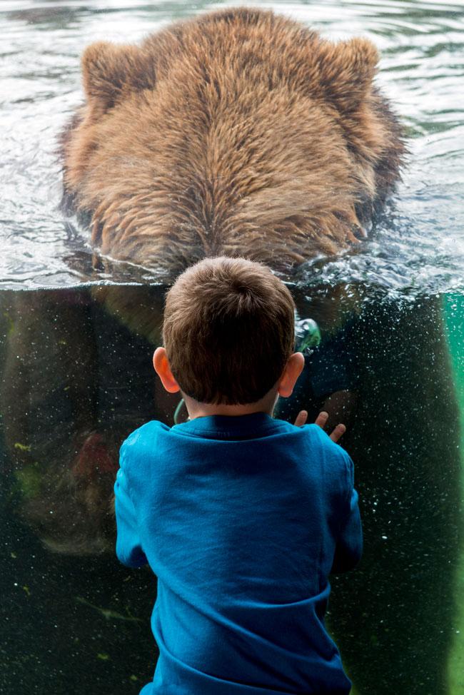 Columbus Zoo And Aquarium Reservations Reservations